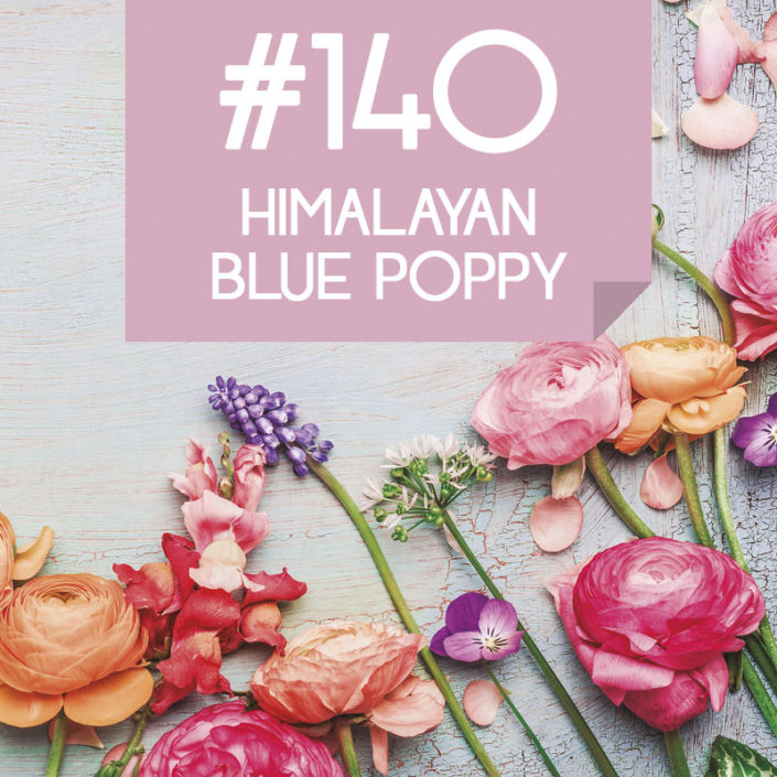 140 Himalayan Blue Poppy