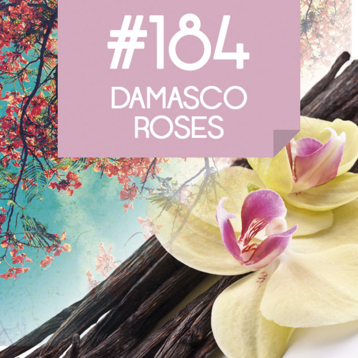 184 Damasco Roses