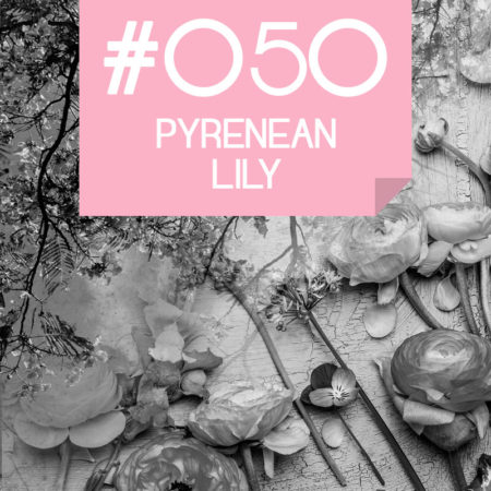 050 Pyrenean Lily